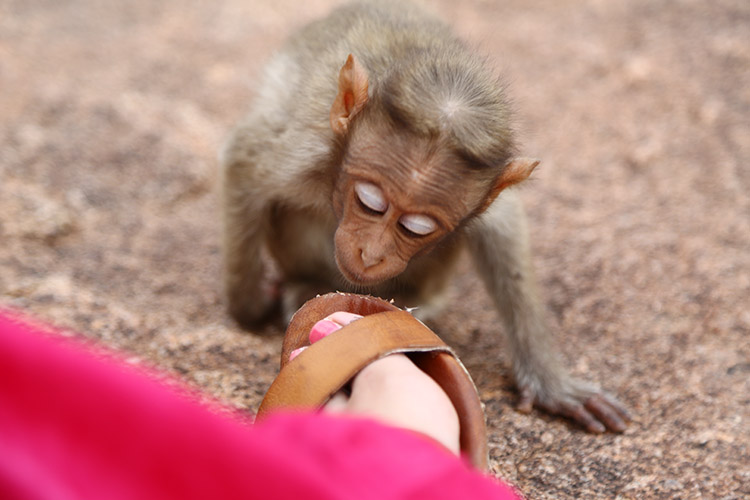 小猿ちゃん