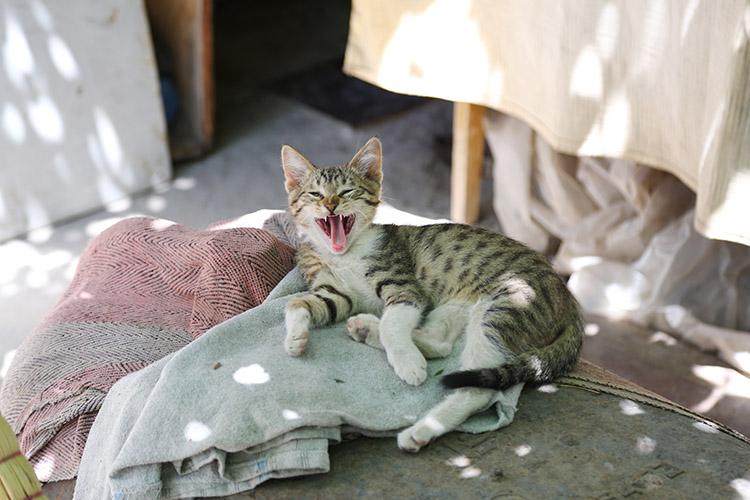 ちび猫トラちゃん