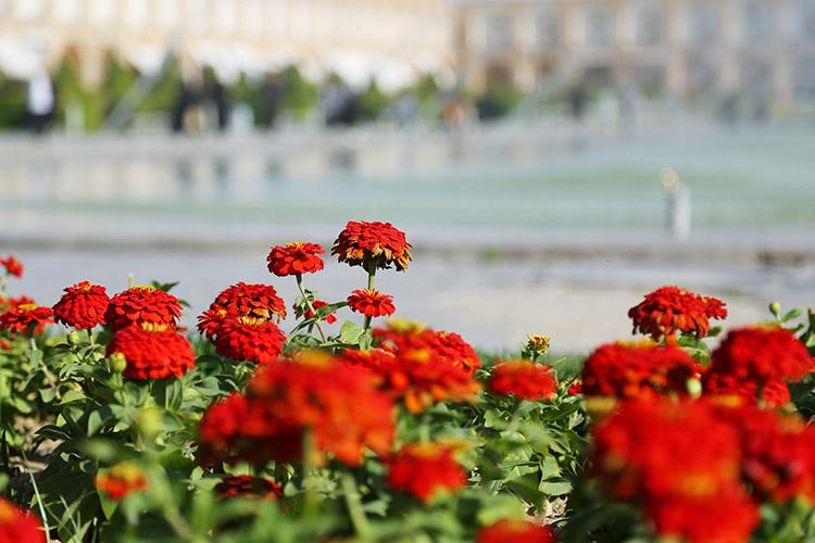 エスファハーンに咲く花