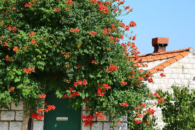 煙突付きの赤い屋根