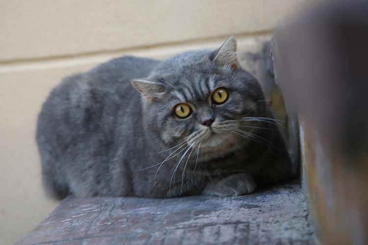 ウクライナ 猫