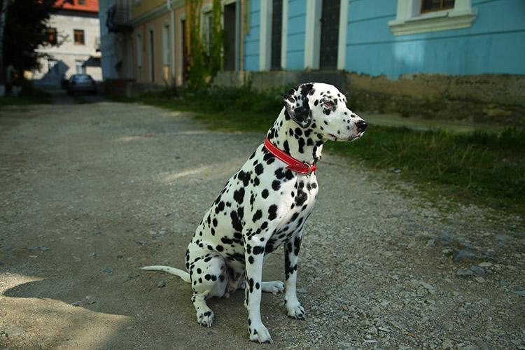 ウクライナ 犬