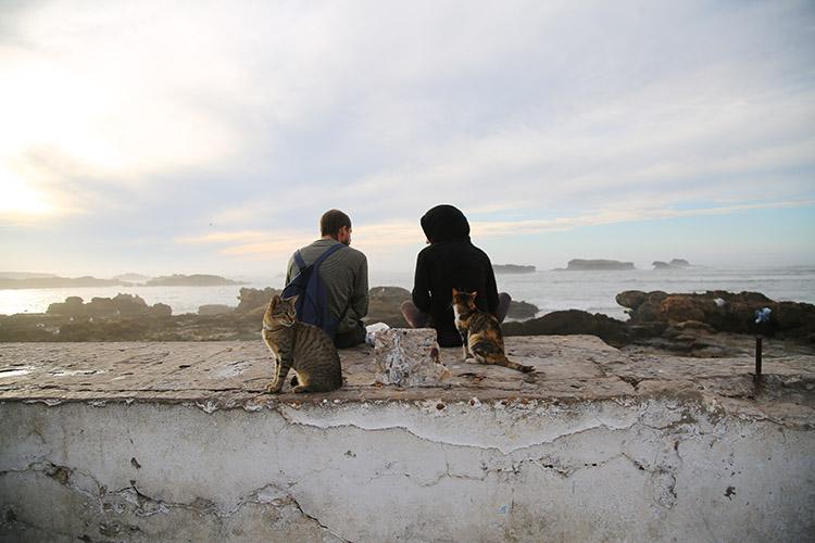 モロッコ 猫 写真