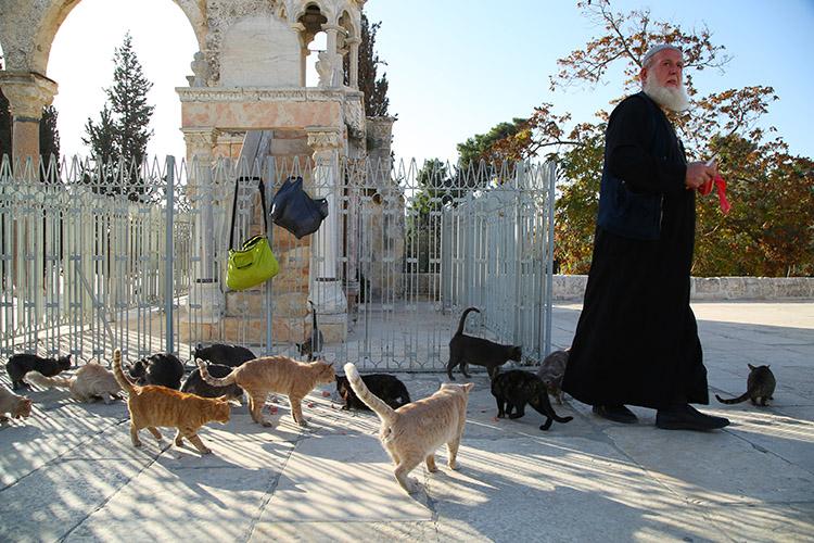 エルサレム 岩のドーム 猫