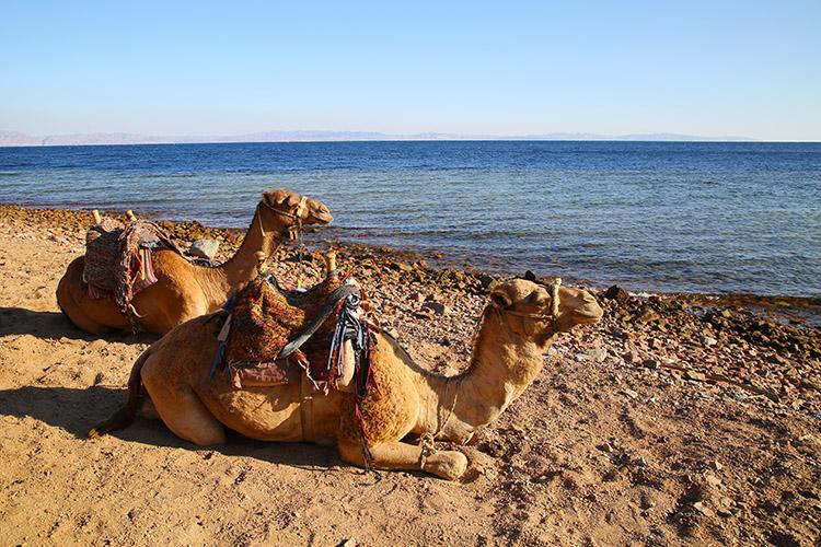 ダハブ ダイビング エジプト