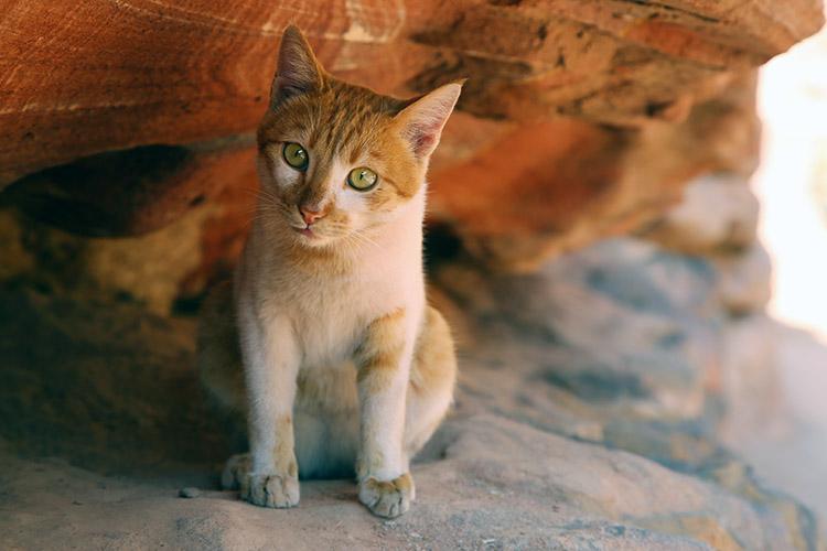 ペトラ遺跡 猫