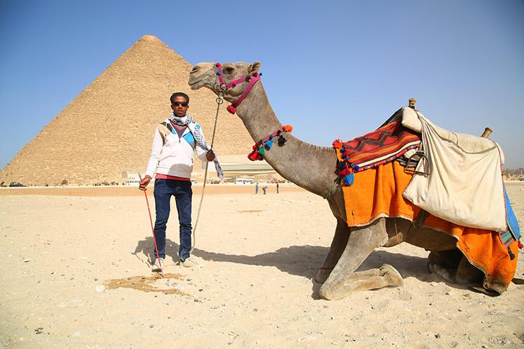 エジプト ピラミッド ラクダ