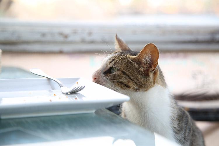 ダハブ 猫