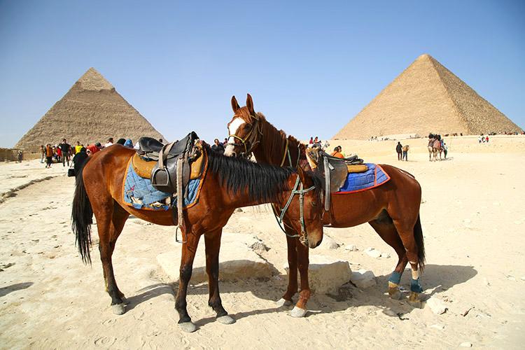 ピラミッド ギザ カイロ エジプト