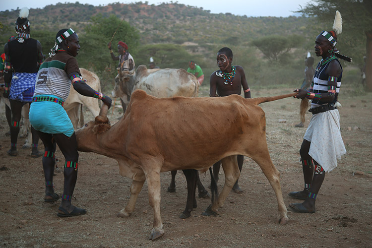エチオピア ディメカ ブルジャンピング ハマル族