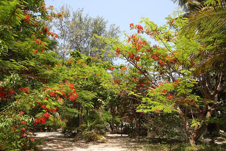ザンジバル パジェ パラダイスビーチバンガロー