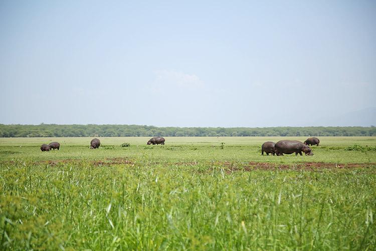 タンザニア サファリ マニャラ湖