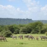 タンザニアで人生初の本場サファリ!