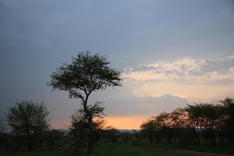 タンザニア サファリ セレンゲティ