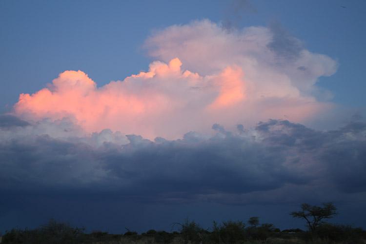 エトシャ国立公園 サファリ ナミビア