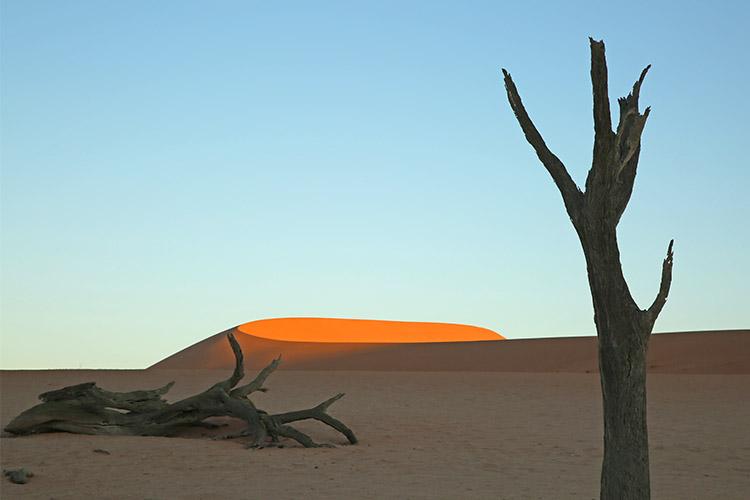 ナミブ砂漠の画像 p1_18