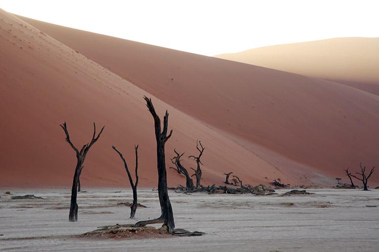 ナミブ砂漠 デッドフレイ