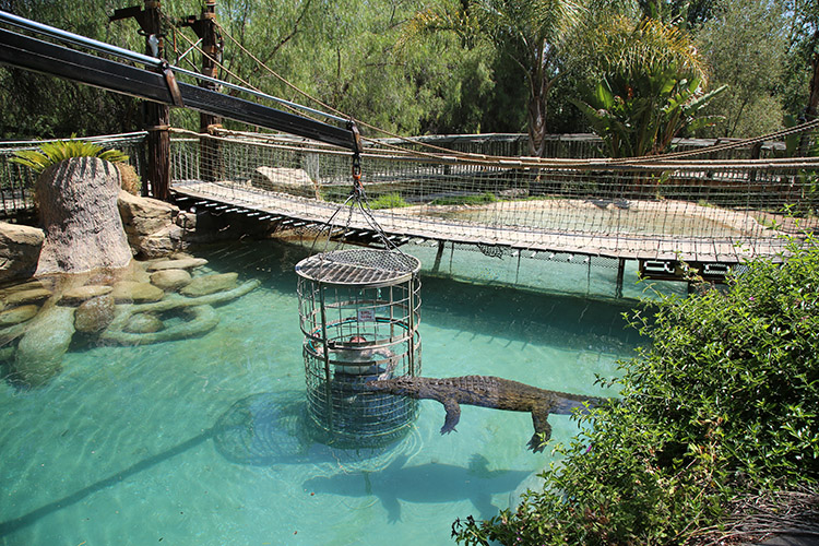 オーツホーン カンゴー野生動物園