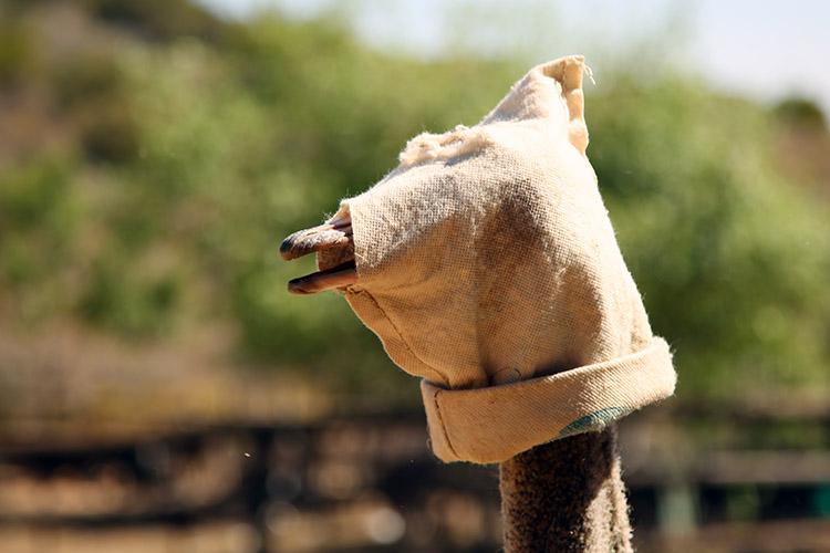 オーツホーン カンゴーダチョウ農園