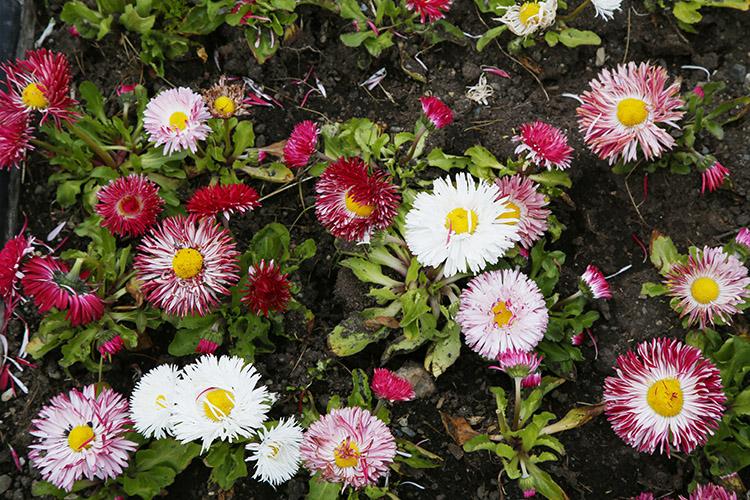 ウシュアイア お花