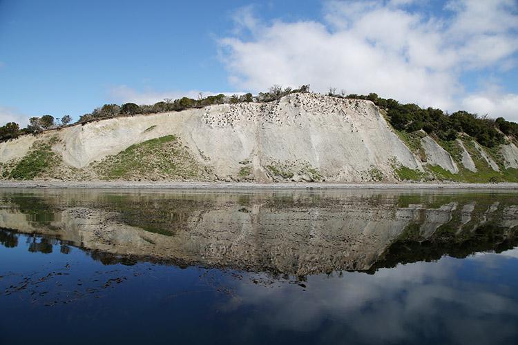 ウミウ ビーグル水道