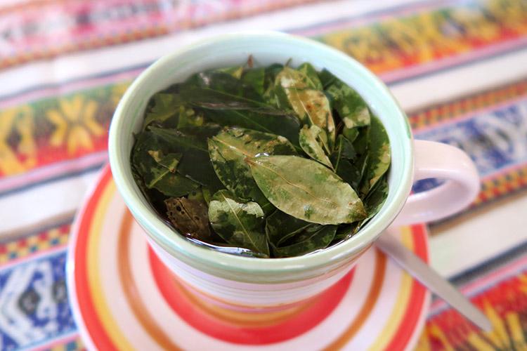ラウカ国立公園 コカ茶