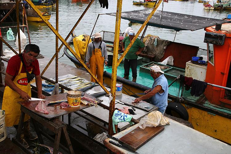 アリカ 漁港 魚市場
