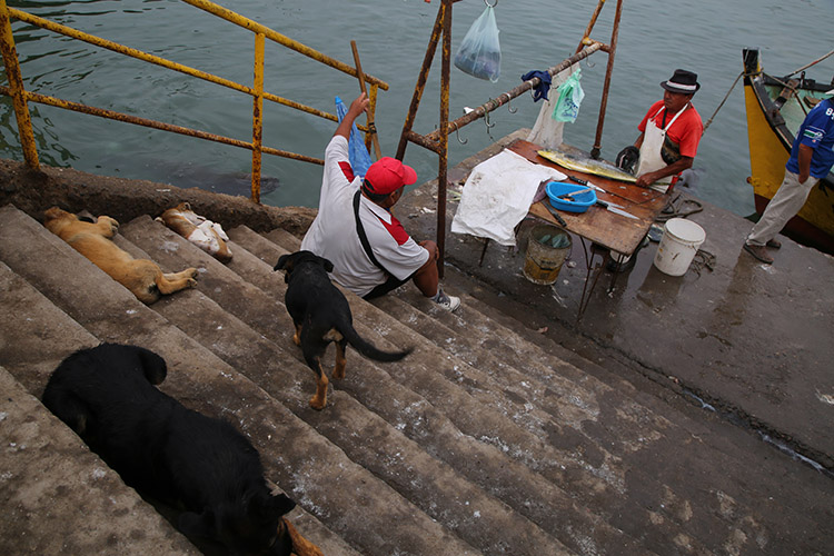 アリカ 漁港 犬