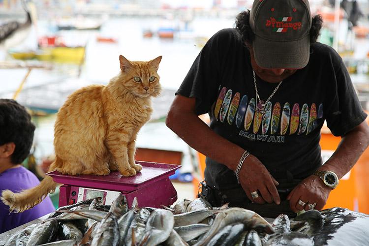 アリカ 漁港 猫
