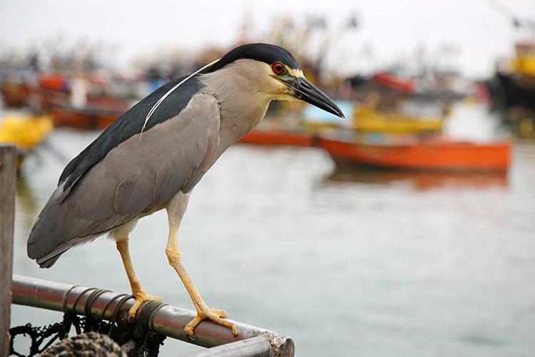 アリカ 漁港 鳥