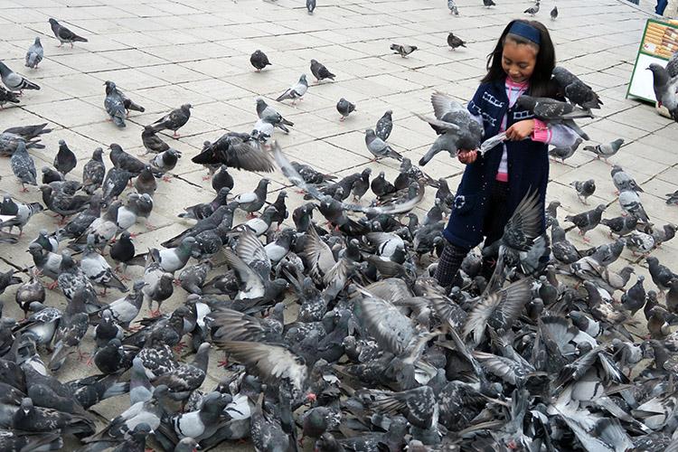 ラパス ムリリョ広場 鳩