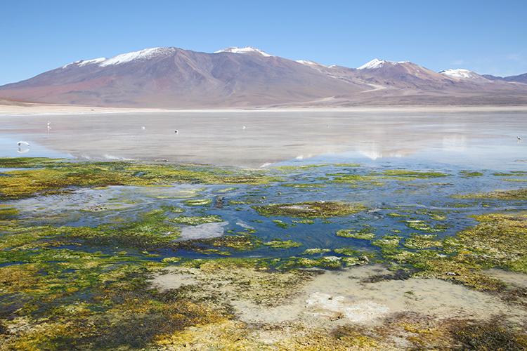 ウユニ塩湖 ツアー 湖
