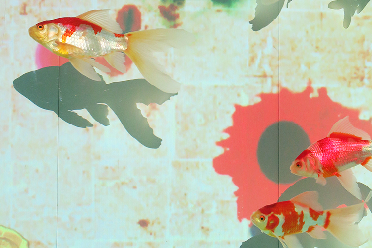 アートアクアリウム展 博多