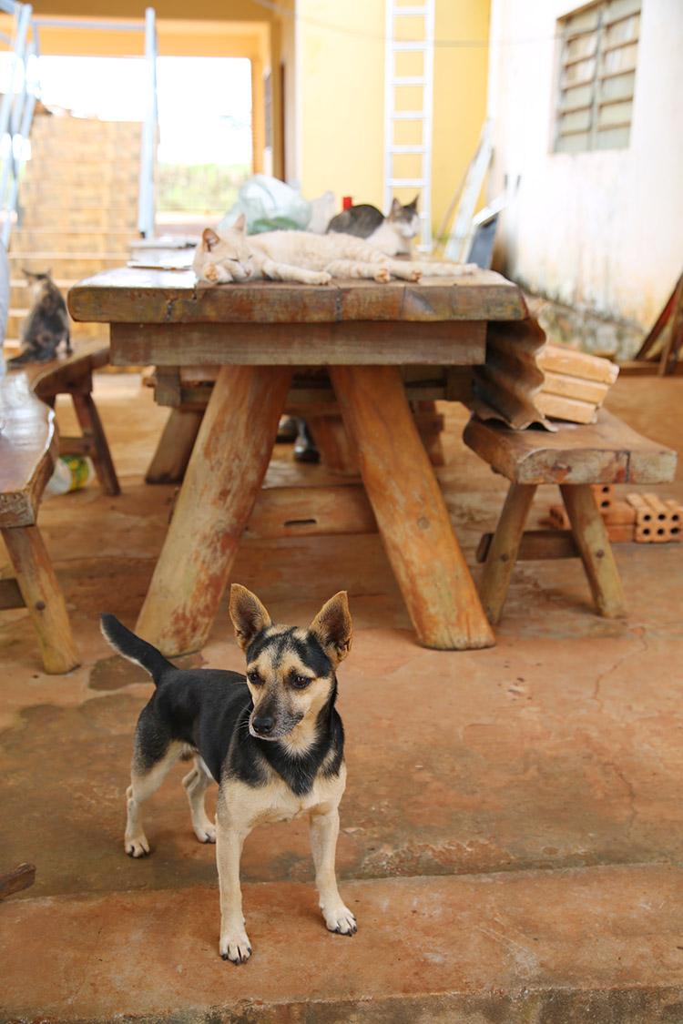 民宿小林 犬 ジョンコ