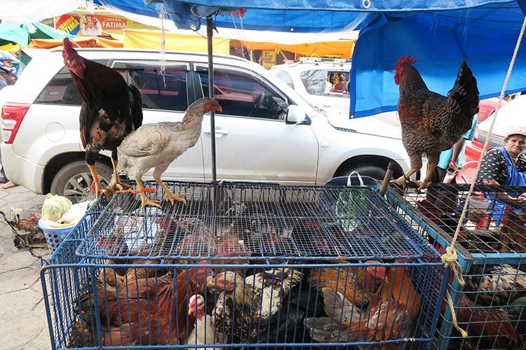 サンタクルス ボリビア 市場 メルカド