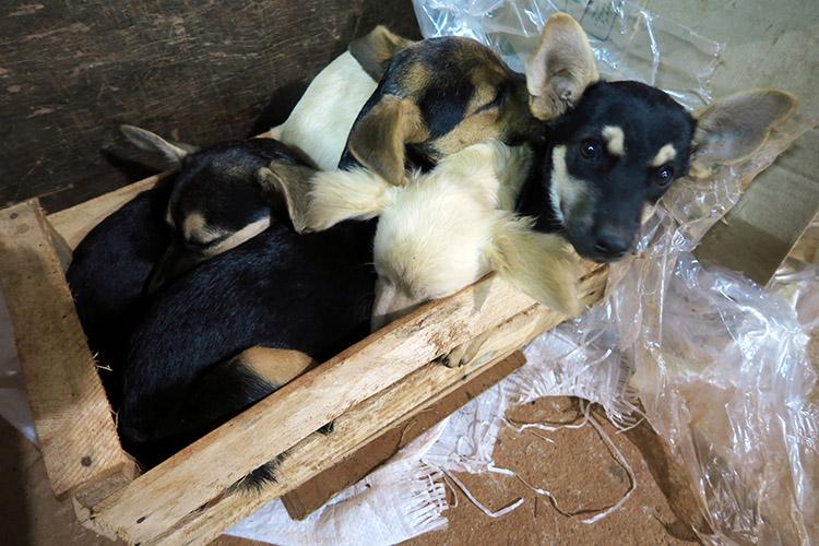 民宿小林 パラグアイ 犬