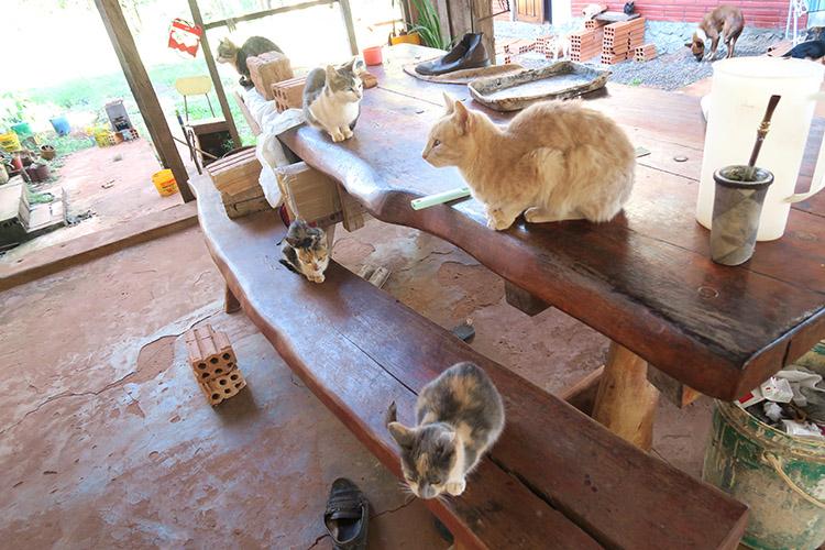 民宿小林 パラグアイ 猫