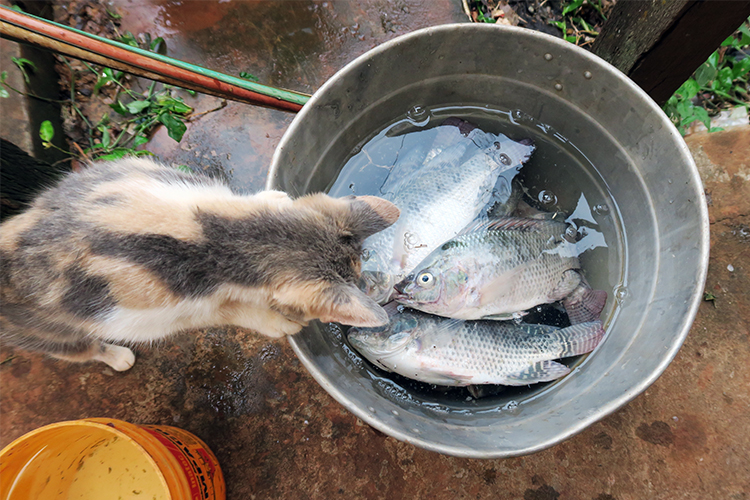 民宿小林 パラグアイ 魚釣り