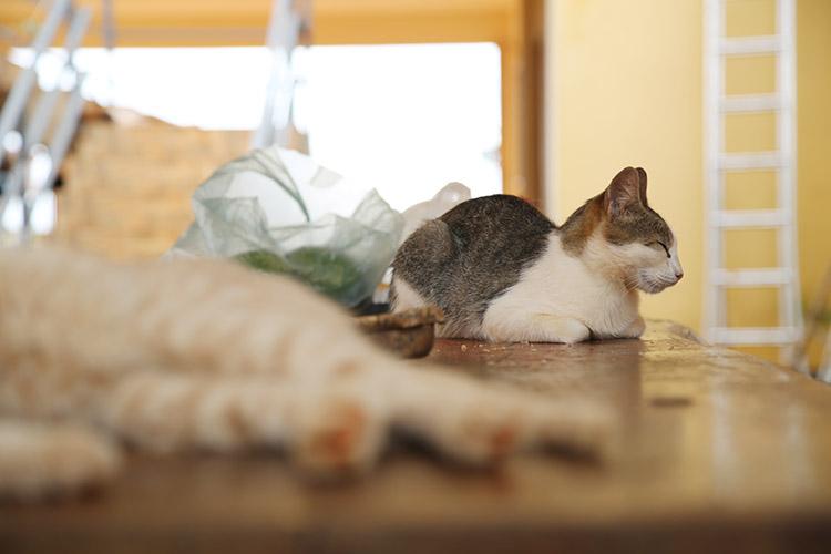 民宿小林 猫 写真