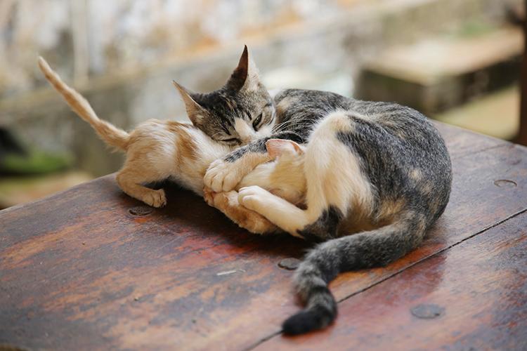 民宿小林 犬 猫