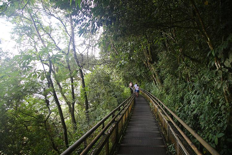 イグアスの滝 アルゼンチン アナグマ