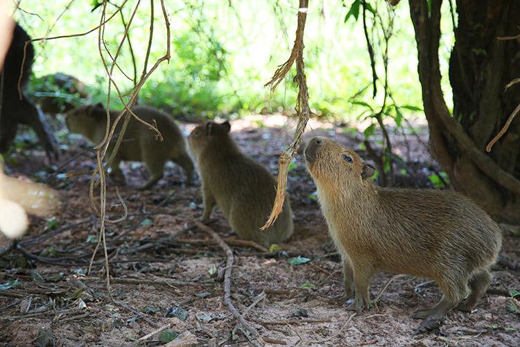 民宿小林 パラグアイ 動物園