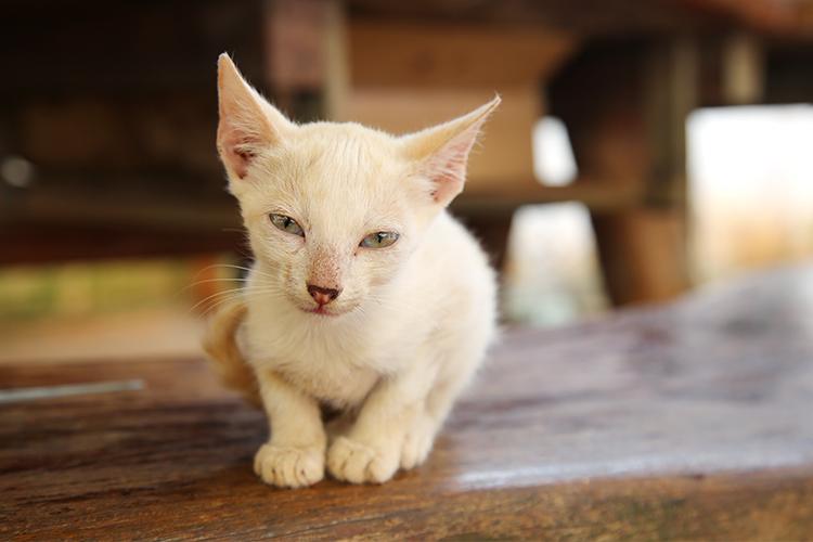 民宿小林 猫 だいふく
