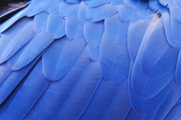 フォズ・ド・イグアス バードパーク 鳥園