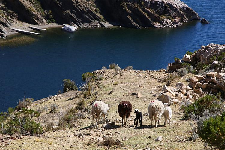 太陽の島 コパカバーナ ツアー ボリビア