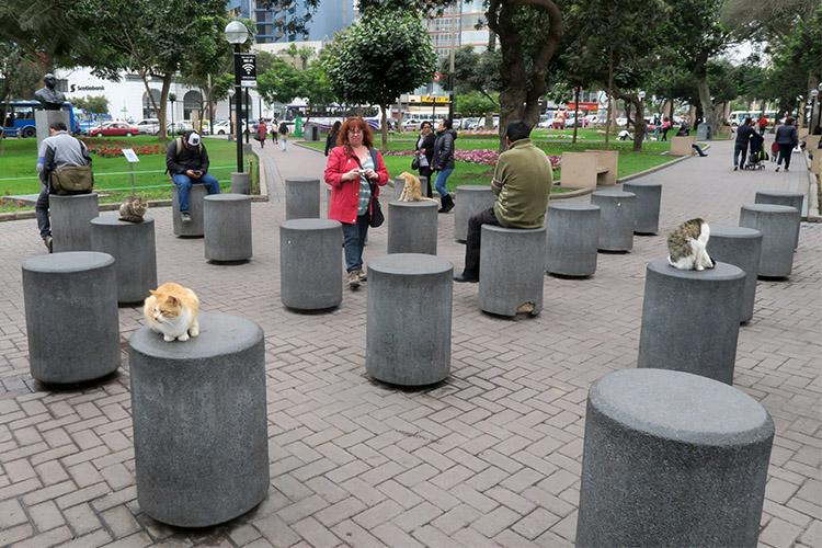 リマ ミラフローレス地区 猫公園