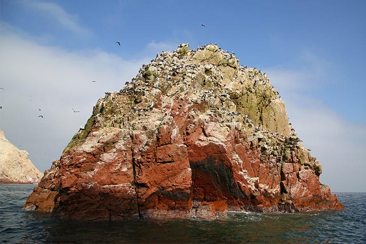バジェスタス島 ツアー リトルガラパゴス パラカス