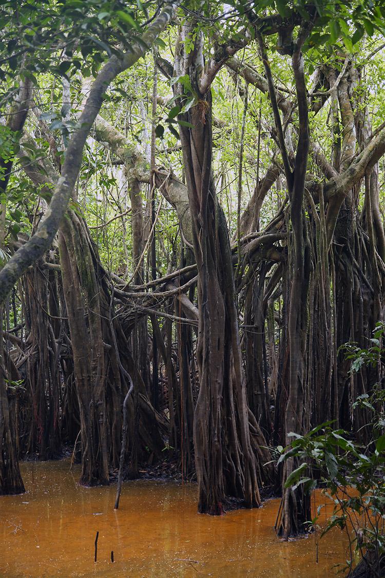 アマゾン川 ツアー イキトス