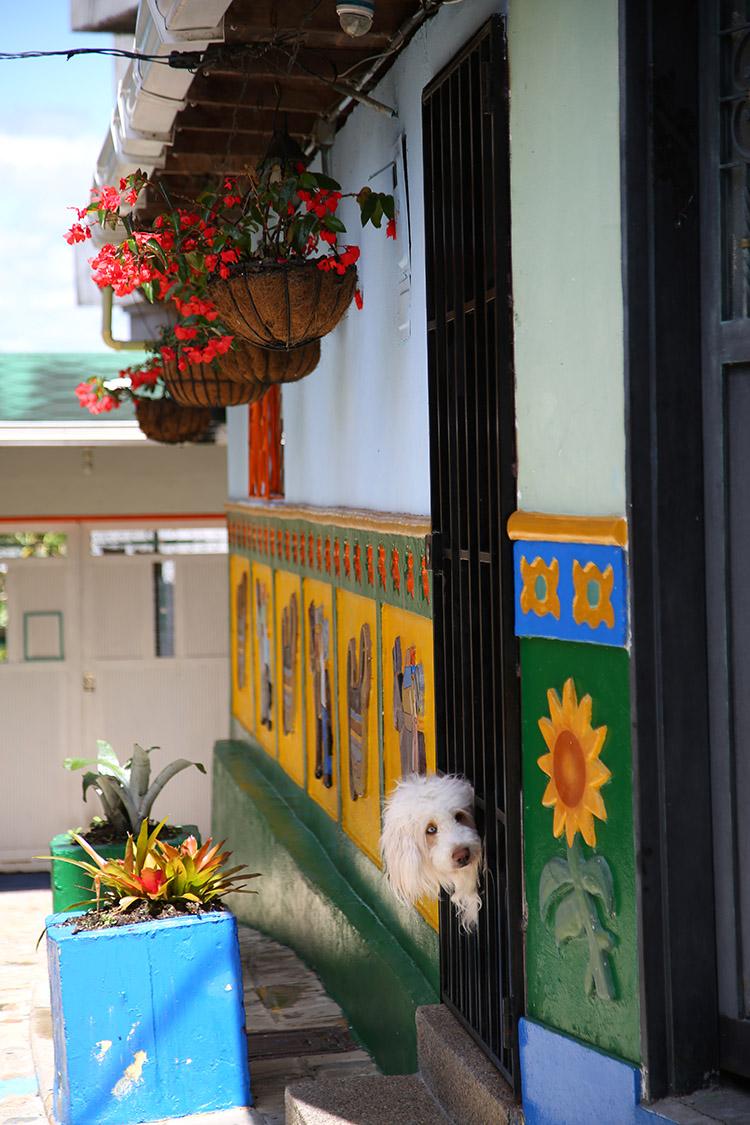 メデジン グアタペ ラ・ピエドラ・デル・ペニョール