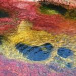 虹が溶けた川、キャノクリスタレス